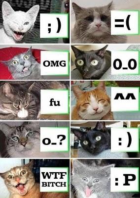 هدية لصديقي محمد بعض أكواد القطط ( صورة )